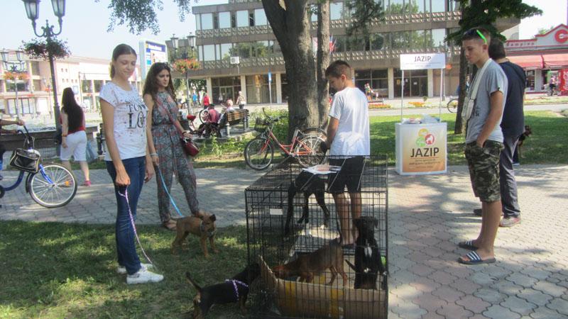 Organizovana akcija udomljavanja pasa iz vrbaskog prihvatilišta