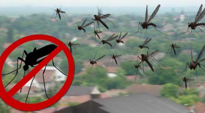 Tretmani protiv komaraca sa zemlje i iz vazduha od 6. do 20. avgusta
