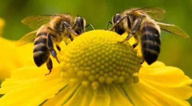 Pčelari apeluju da se voćke ne prskaju – Dvostruka šteta