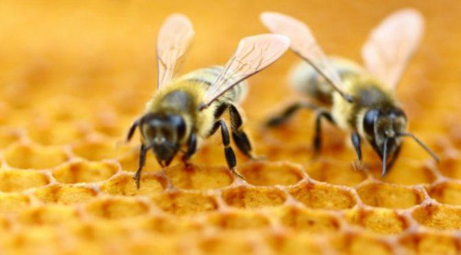 AP Vojvodina sufinansira investicije u pčelarstvo – Raspisan konkurs