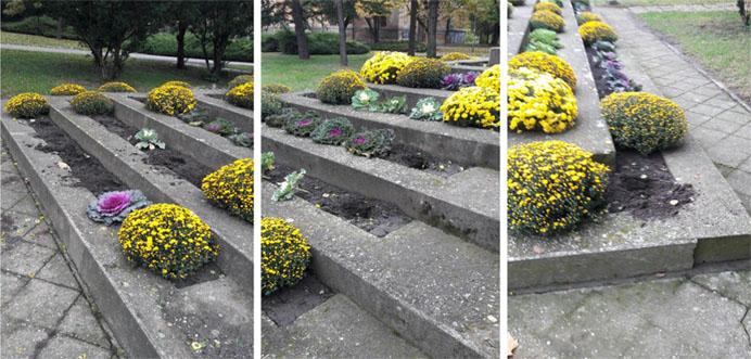 Pokradene sadnice sa spomenika Palim borcima